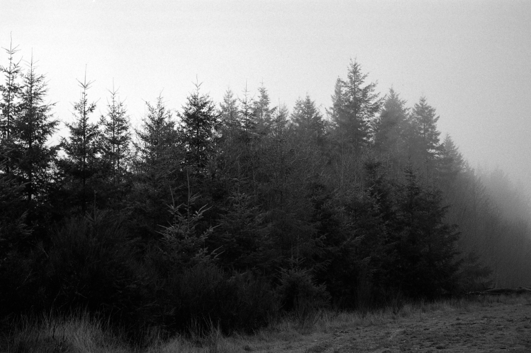 121318 R4M 7A CapForest HP5800 445-Edit